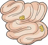 picture of small-intestine  - Isolated hand drawn human small intestine with food pieces - JPG
