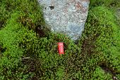 image of phone-booth  - Red phone booth in the green moss - JPG