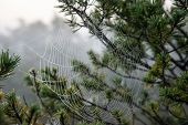 pic of spiderwebs  - Beautiful spiderweb with dew drops in autumn - JPG