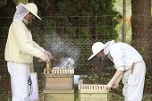 Beekeeper At Work With Bees