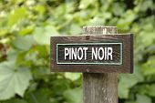 Pinot Sign