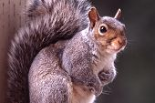 stock photo of f4  - This squirrel was photographed on my back porch with Nikon F4 with Nikon 300mm AFS lens - JPG