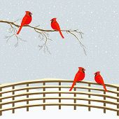 image of bird fence  - Red birds on branch and fence in winter - JPG