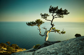 pic of crimea  - Tree and sea at sunset - JPG