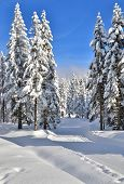 Fresh Track For Cross-country Skiing