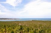image of northeast  - coconut trees in the Brazilian Northeast in summer - JPG