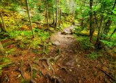 foto of descending  - A high angle shot of a descending path in a forest during the autumn season - JPG