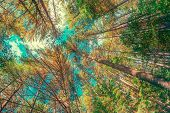stock photo of angles  - A wide angle shot of towering trees in a forest during the autumn season - JPG