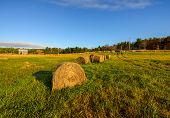 pic of hay bale  - Bales of hay out on a farm field during a clear sunny day in the autumn season - JPG