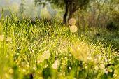 Forest Glade In Morning Sun Light