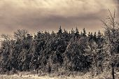 pic of snow forest  - Snowing on an ice covered forest landscape after an ice storm during the winter season - JPG