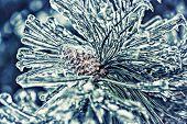 Ice Covered Pine Tree Needles And Pine Cone - Retro