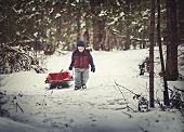 foto of sled  - A young boy dressed for cold weather pulls a sled by a rope along in the snow in a forest during the winter season - JPG