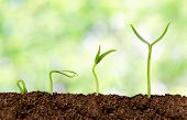 picture of  plants  - Plants growing from soil  - JPG
