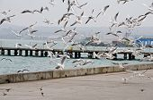 Flock Of Seagulls Flying On The Waterfront