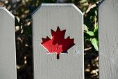 stock photo of canada maple leaf  - Wooden fence showing the Canadian symbol of the Maple Leaf - JPG