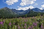 A Beautiful Valley In The Polish Tatra Mountains
