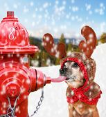 a chihuahua dressed up for christmas as a reindeer licking a fire hydrant with his tongue stuck to it