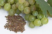 Grape and grape seeds