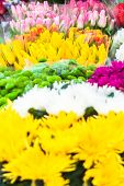 Colorful background of different flower kinds