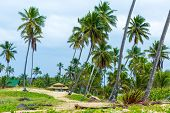 stock photo of hippy  - Palm Trees at Aldeia dos Hippies in Bahia - JPG