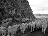Finding the Way, Tasmania, Australia, in Monochrome