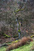 European Deciduous Forest