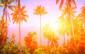 View of nice tropical background with coconut palms. Samui, Thailand. Vintage filter