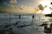 Stilt fishermen 2