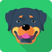 stock photo of spotted dog  - Vector dog Rottweiler face icon flat design - JPG