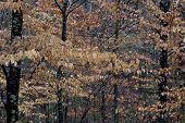 Fall Woods 2