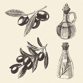 stock photo of olive branch  - Olive branch and olive bottle set hand drawn vector illustration engraving - JPG