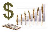 price growth grain