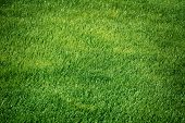 stock photo of lawn grass  - Image of Background of Green Grass Lawn - JPG