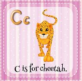stock photo of cheetah  - Flashcard for letter C with a picture of cheetah - JPG