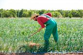 pic of hoe  - Farmer man working in onion orchard field with hoe tool - JPG