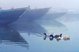 picture of gang  - Ducks near boats on sacred river Ganges at cold foggy winter morning - JPG