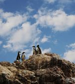 Four penguins on the rock
