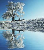 Alone frozen tree