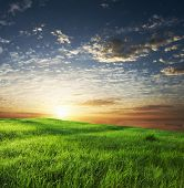 green grassland on sunset