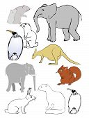 Various Vector Animals