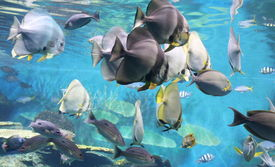 foto of under sea  - fish under water - JPG
