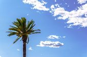 Beautiful Spreading Palm Tree Against A Blue Sky, Exotic Plant Symbol Of Holidays poster