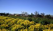 picture of crotons  - Rows of croton and rose plants in a nursery - JPG