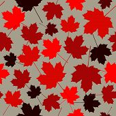 Seamless Pattern From Maple Leaves. Red Maple Leaves On A White Background. poster