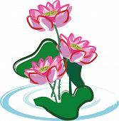 Lotus Flower.Eps