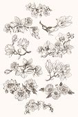 Botany. Set. Vintage Flowers. Black And White Illustration In The Style Of Engravings. poster
