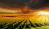 A Beautiful Sunset over an Adelaide Hills winery