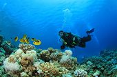 Scuba Diver swims over coral reef