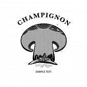 mushroom, engraving style illustration